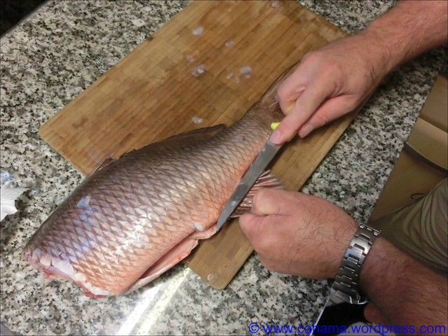 comp_CR_CIMG5051_Fisch_filetieren