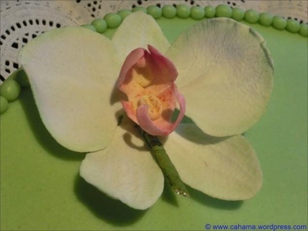 comp_CR_CIMG5192_Erdbeer-Pistazien_Schichttorte
